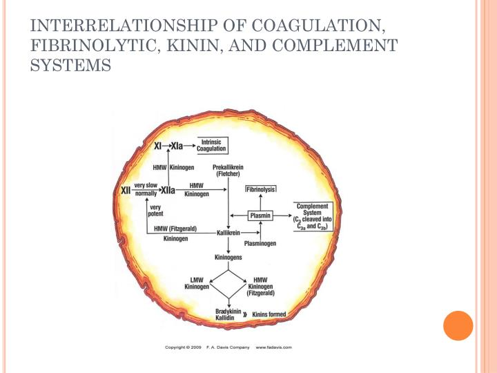 INTERRELATIONSHIP OF COAGULATION, FIBRINOLYTIC, KININ, AND COMPLEMENT SYSTEMS