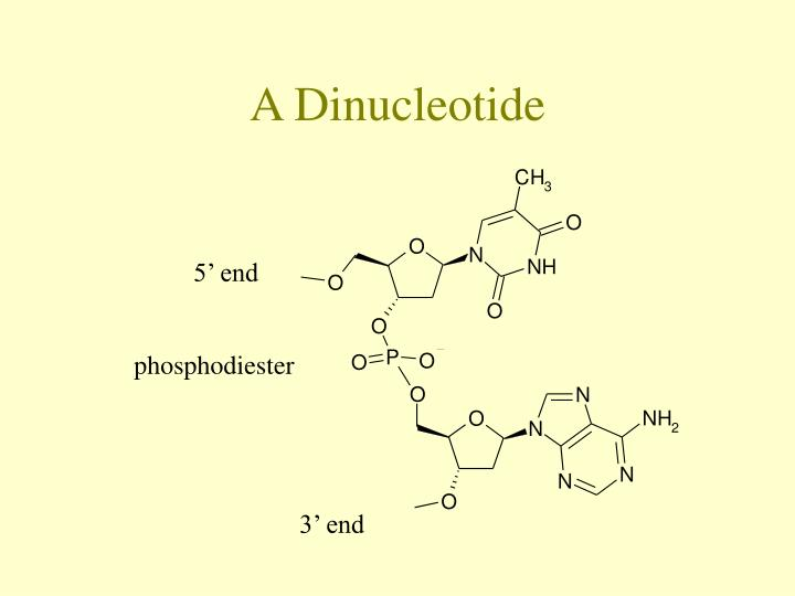 A Dinucleotide