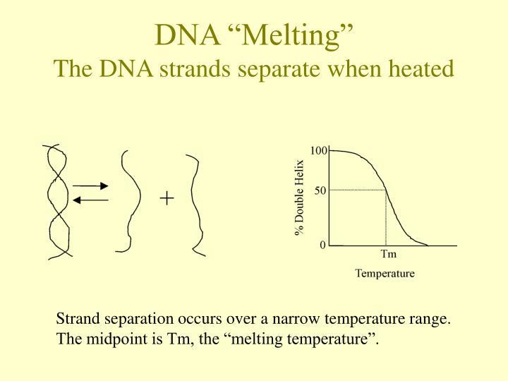 "DNA ""Melting"""