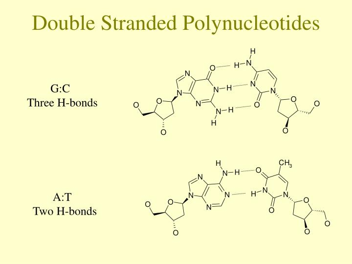 Double Stranded Polynucleotides