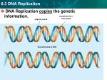 dna replication copies the genetic information