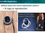 what does the word replication mean