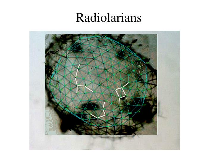 Radiolarians