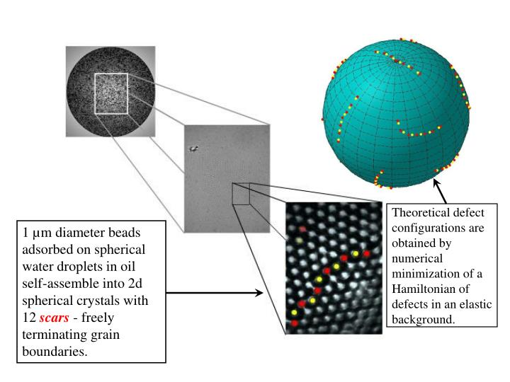 Theoretical defect configurations are obtained by numerical minimization of a Hamiltonian of defects in an elastic background.