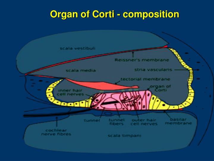 Organ of Corti - composition