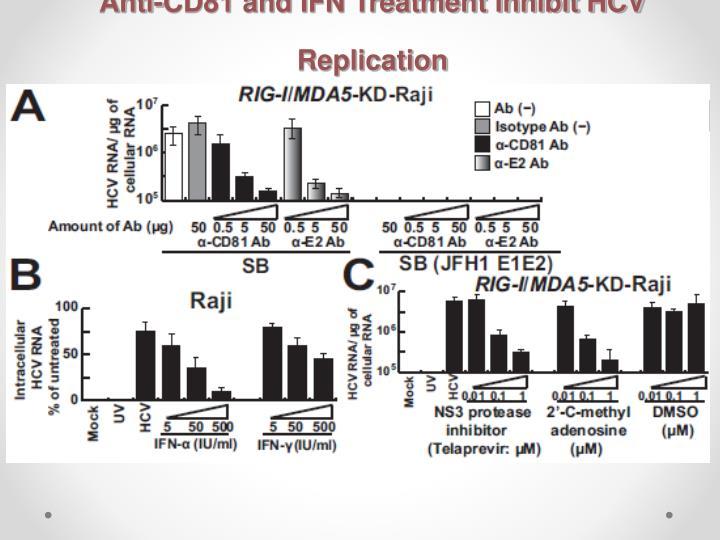 Anti-CD81 and IFN Treatment Inhibit HCV Replication