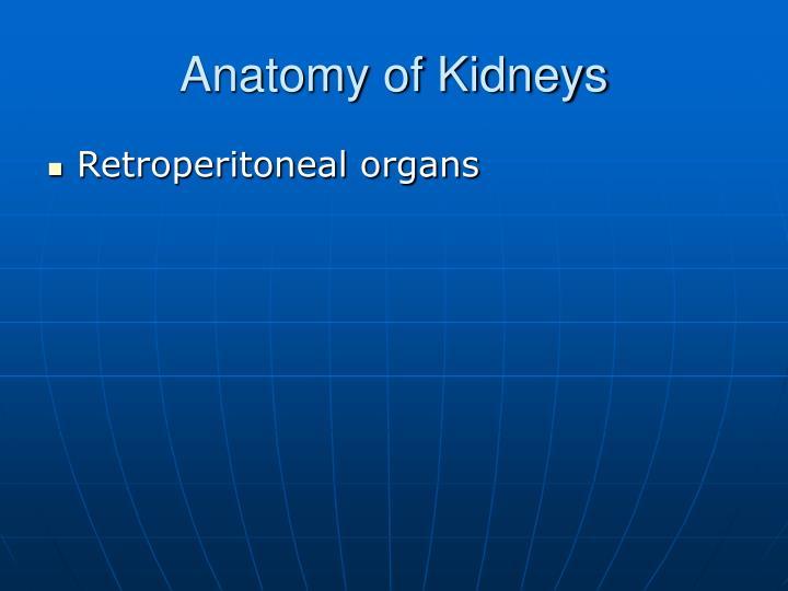 Anatomy of Kidneys