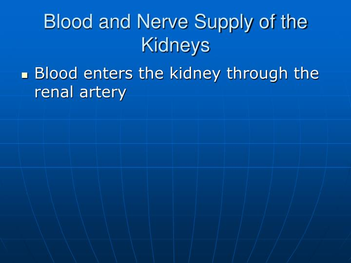 Blood and Nerve Supply of the Kidneys