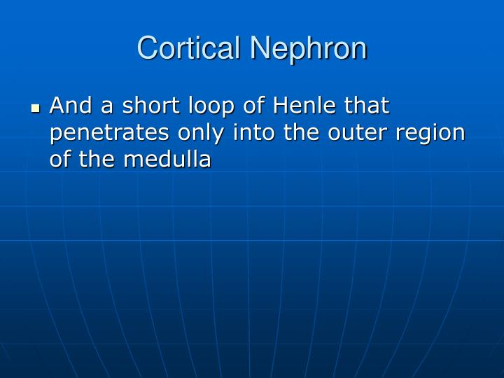 Cortical Nephron