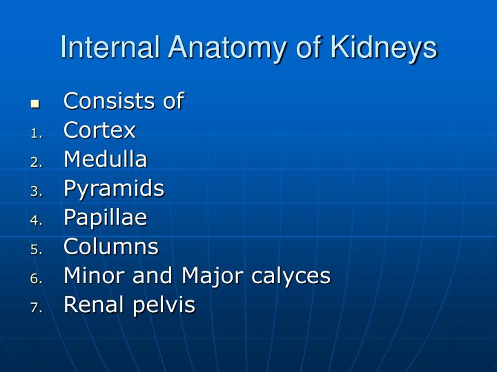 Internal Anatomy of Kidneys