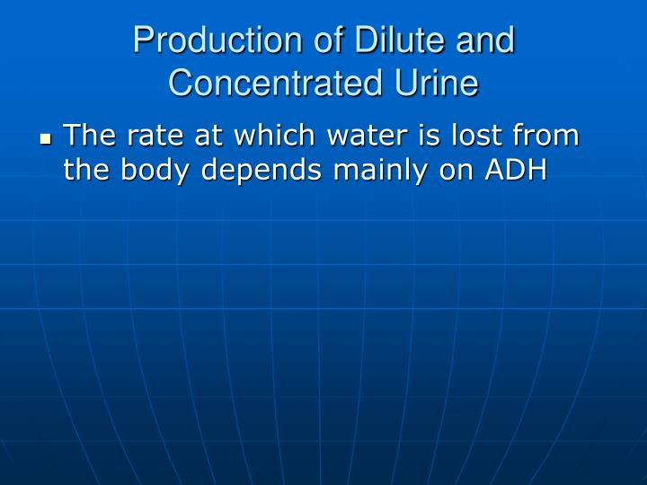 Production of Dilute and Concentrated Urine