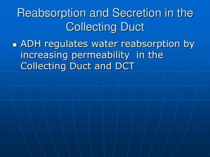 Reabsorption and Secretion in the Collecting Duct