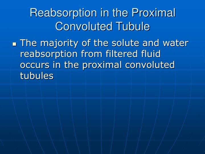 Reabsorption in the Proximal Convoluted Tubule