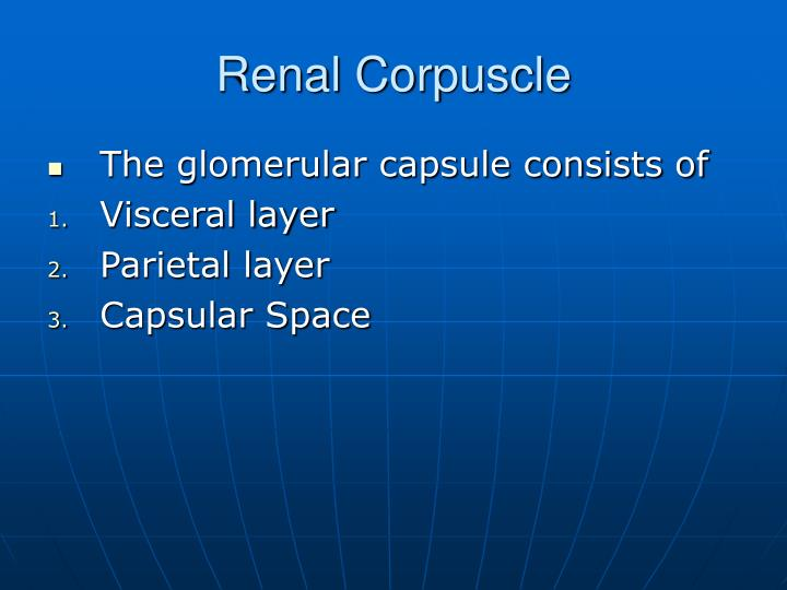 Renal Corpuscle