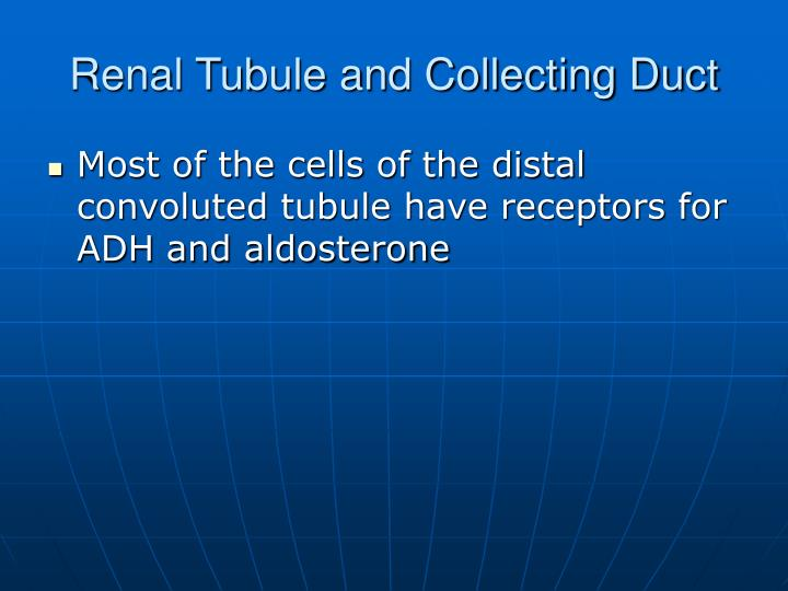 Renal Tubule and Collecting Duct