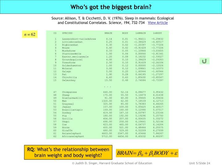 Who's got the biggest brain?