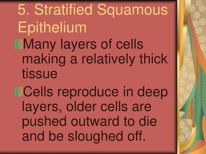 5. Stratified Squamous