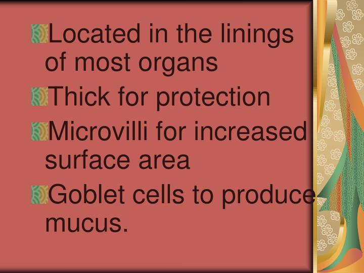 Located in the linings of most organs