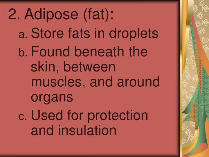 2. Adipose (fat):