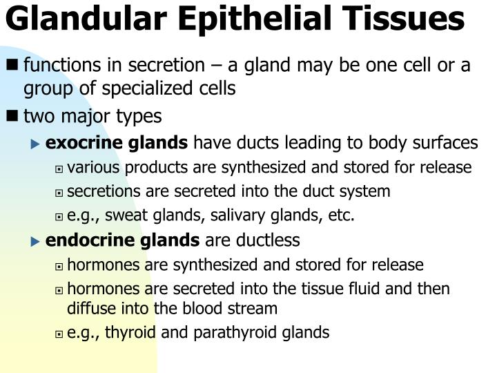 Glandular Epithelial Tissues