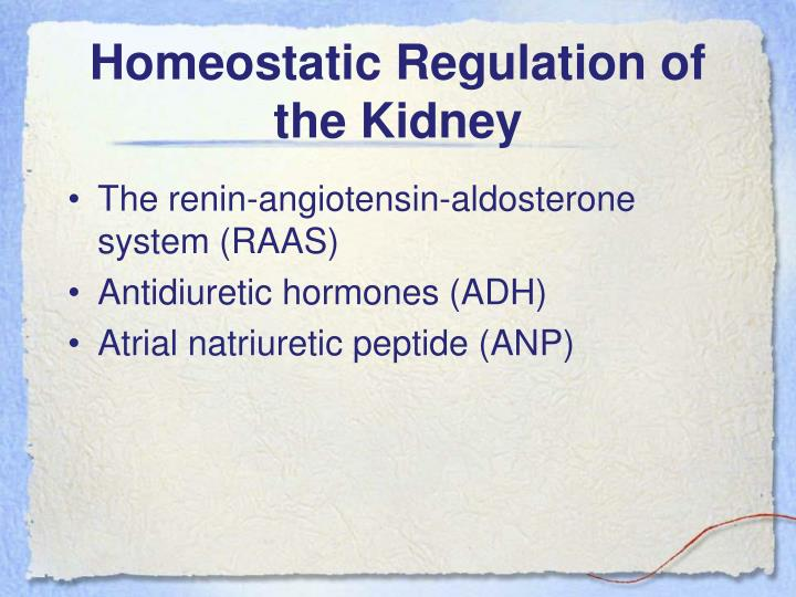Homeostatic Regulation of the Kidney