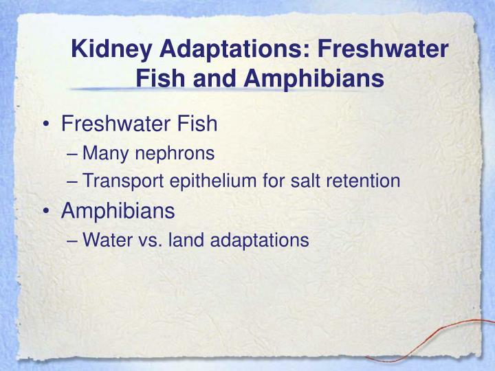 Kidney Adaptations: Freshwater Fish and Amphibians