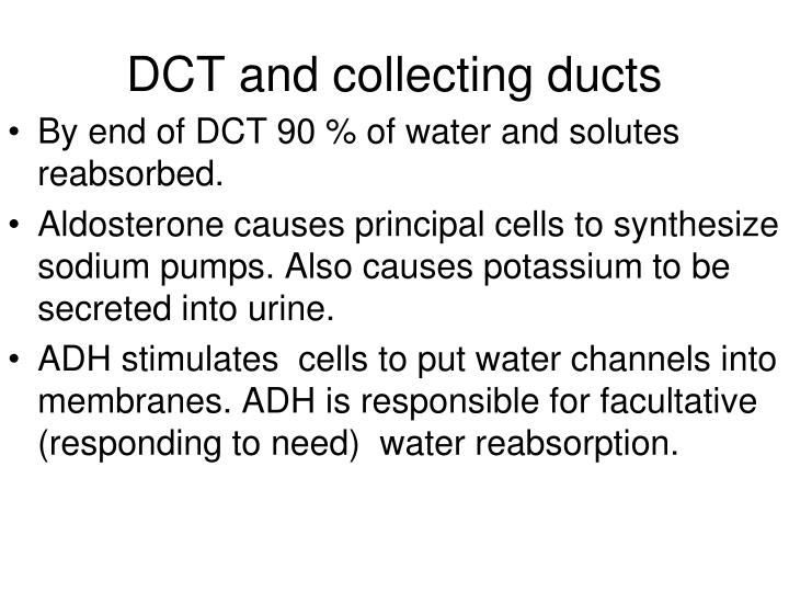 DCT and collecting ducts