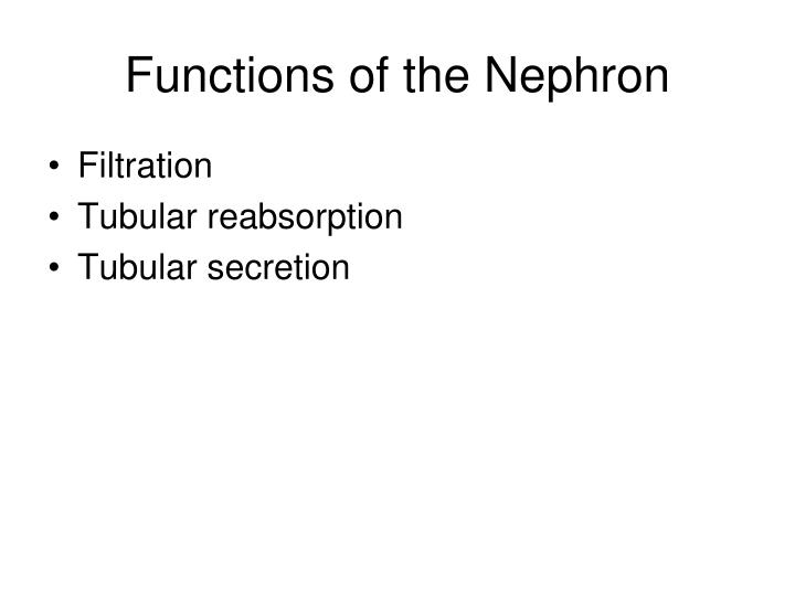 Functions of the Nephron