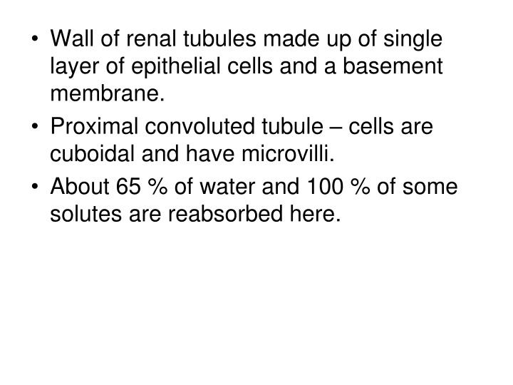 Wall of renal tubules made up of single layer of epithelial cells and a basement membrane.