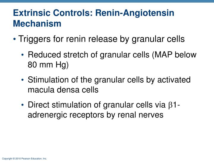 Extrinsic Controls: Renin-Angiotensin Mechanism