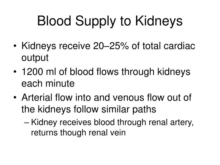 Blood Supply to Kidneys