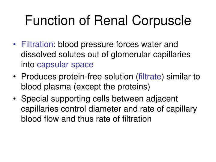 Function of Renal Corpuscle