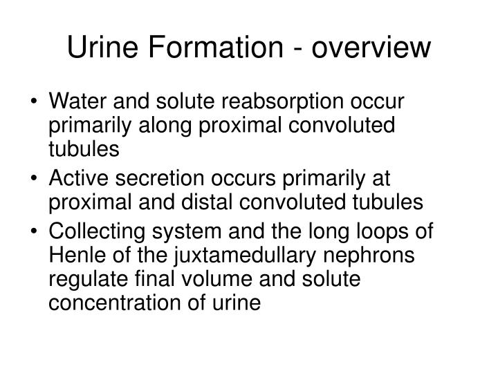 Urine Formation - overview