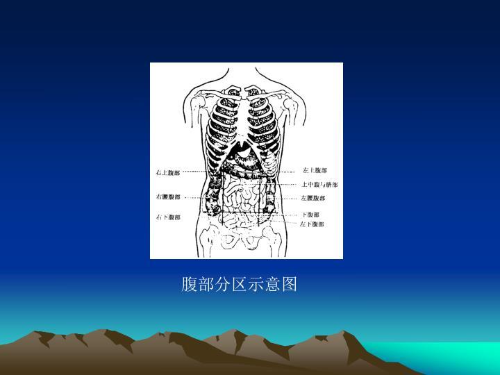 腹部分区示意图