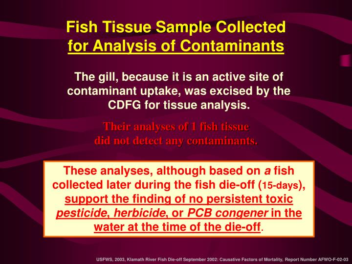 Fish Tissue Sample Collected