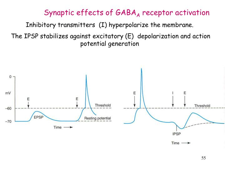 Synaptic effects of GABA