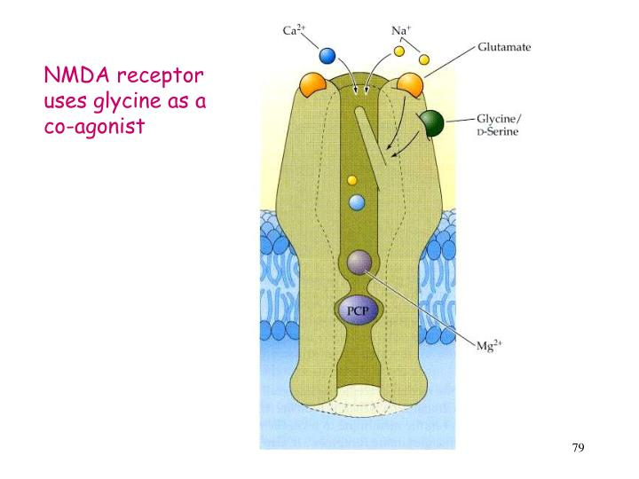 NMDA receptor uses glycine as a co-agonist