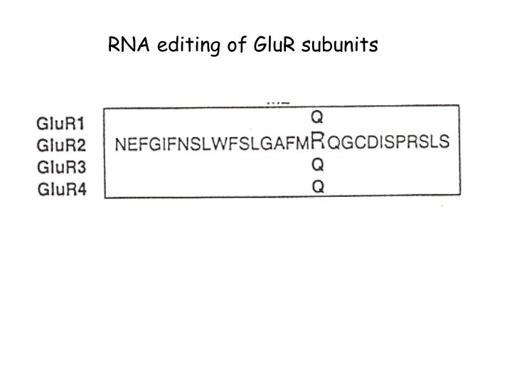 RNA editing of GluR subunits
