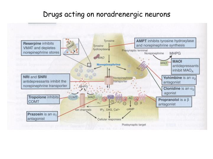 Drugs acting on noradrenergic neurons