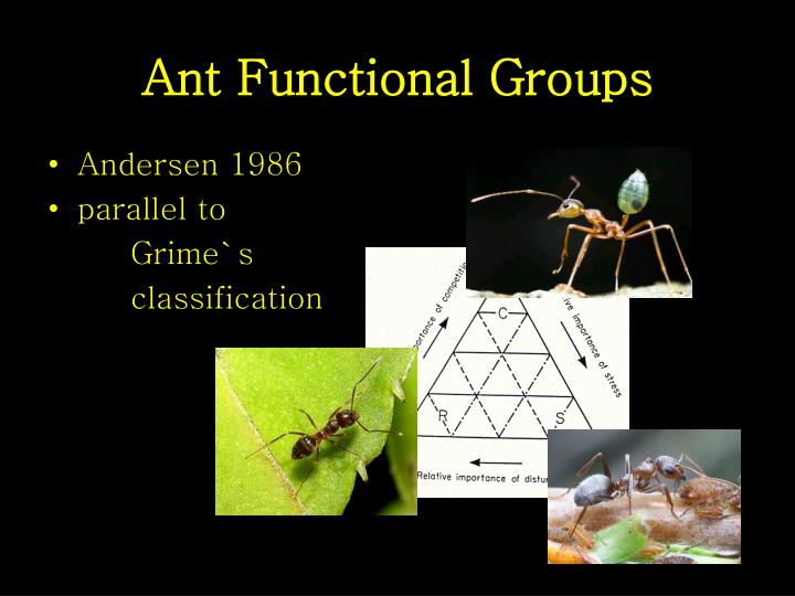 Ant Functional Groups