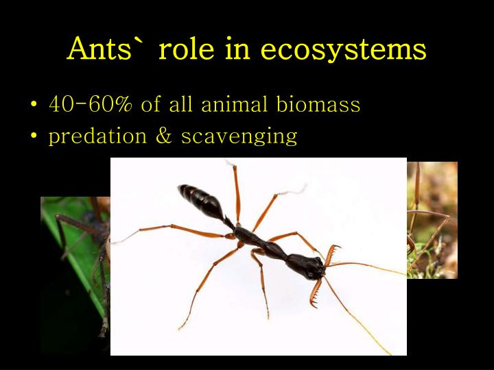 Ants role in ecosystems