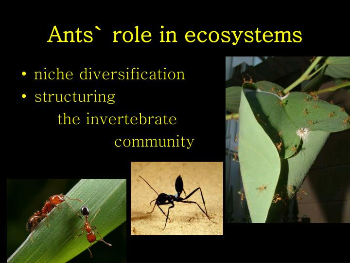 Ants role in ecosystems1