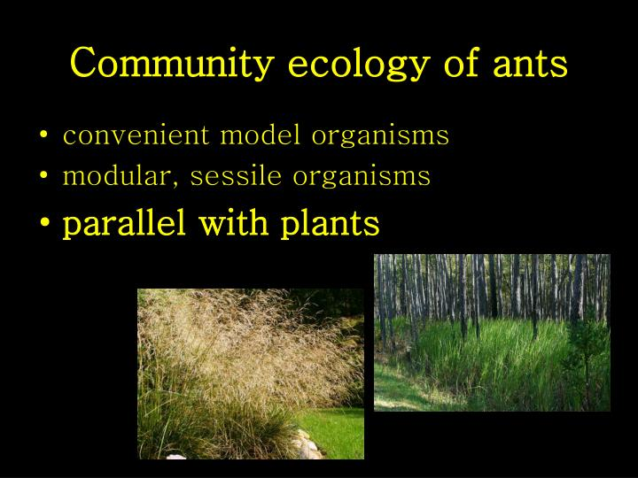 Community ecology of ants