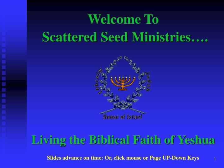 scattered seed ministries