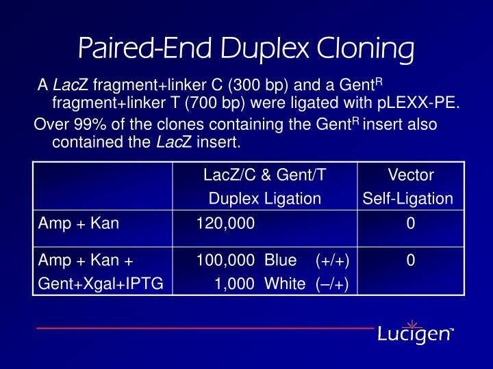 Paired-End Duplex Cloning