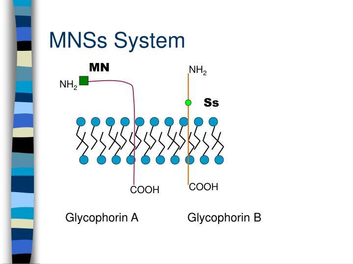 MNSs System