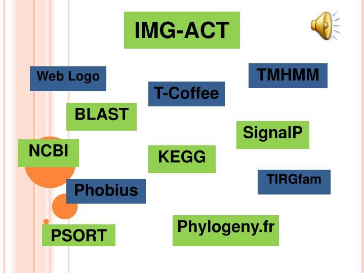 IMG-ACT