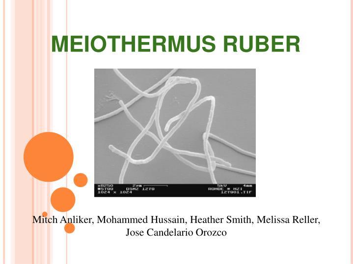MEIOTHERMUS RUBER