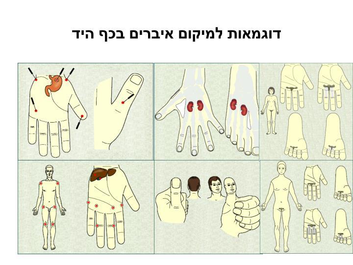 דוגמאות למיקום איברים בכף היד