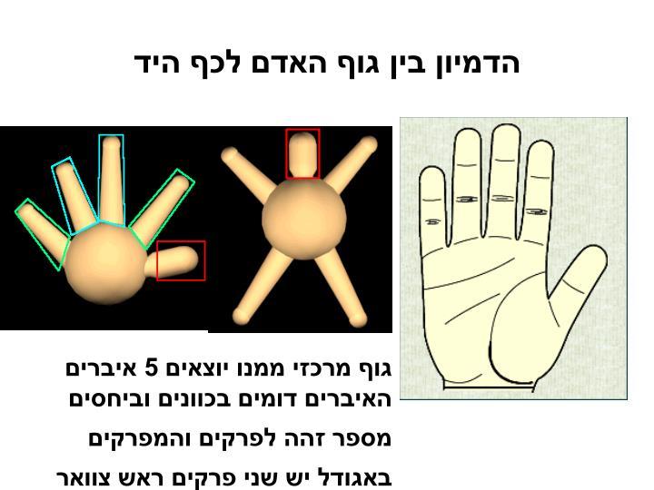 הדמיון בין גוף האדם לכף היד